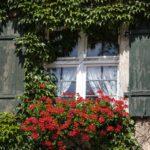 Kletterpflanzen – Standort & Pflanzung