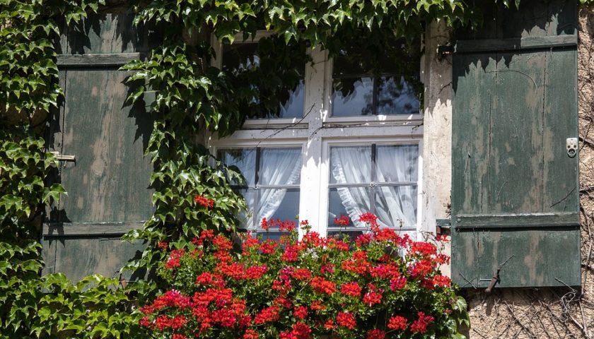 Kletterpflanzen - Standort & Pflanzung