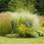 Das Pflanzen von Stauden