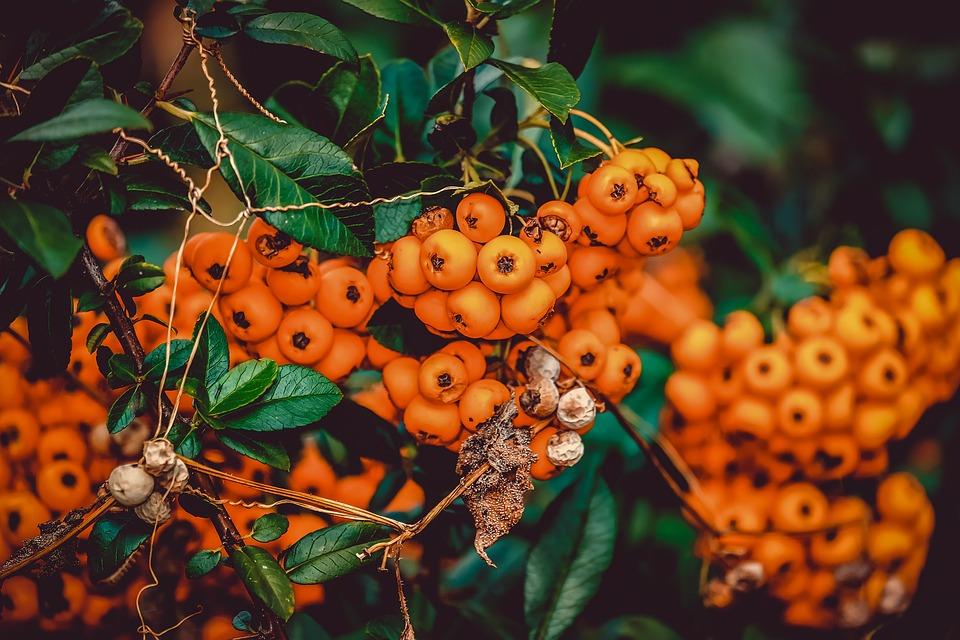 Das Pflanzen von Ziersträuchern- und bäumen